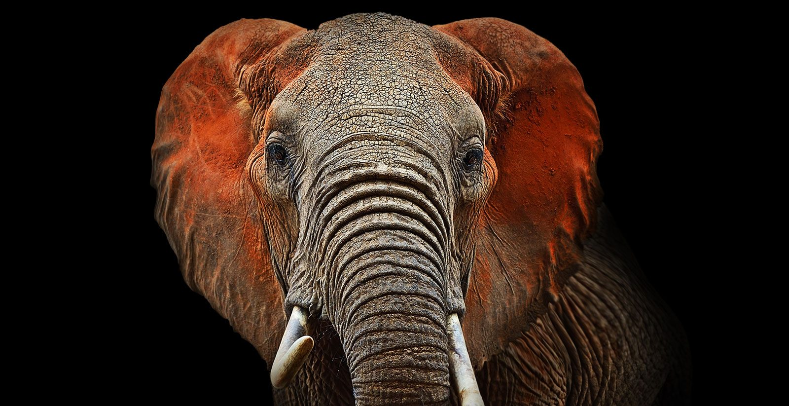 事务所 optitax-elefant